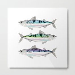 Colourful Mackerel Metal Print