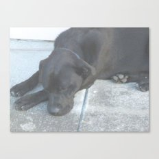 Midnight Just Wants to Take A Nap Canvas Print