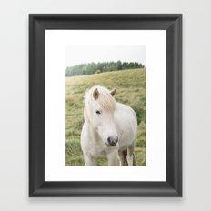 Icelandic Horse in Field Framed Art Print