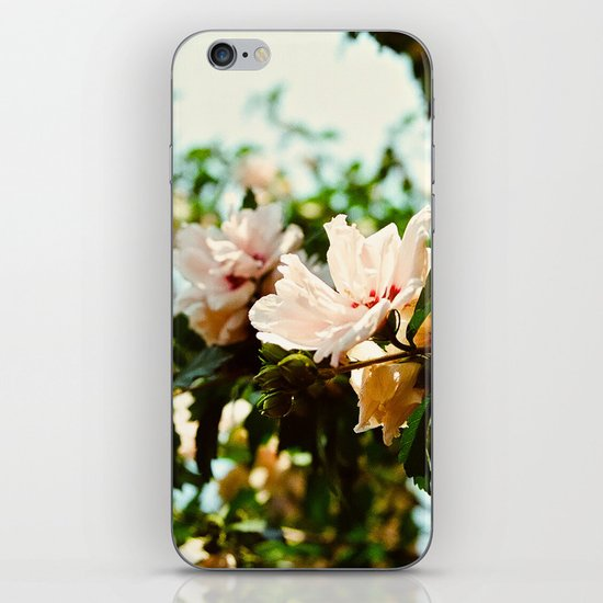 Light and Delicate iPhone & iPod Skin