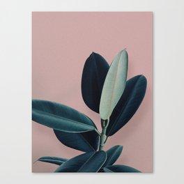 Ficus elastica - berry Canvas Print