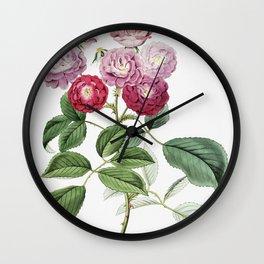 Dr Gills selago from Edwardss Botanical Register (1829-1847) by Sydenham Edwards John Lindley and Ja Wall Clock