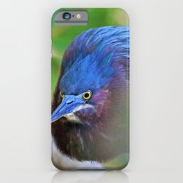 The Green Heron at Ding II iPhone Case