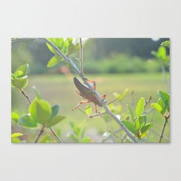 Golden Afternoon Canvas Print