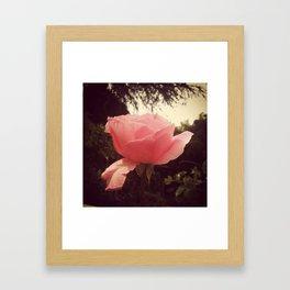 Rose Pose Framed Art Print