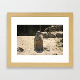 Seal Sitting On A Beach Framed Art Print