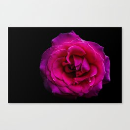 Hot Pink Canvas Print