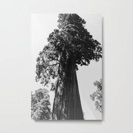 Sequoia National Park VI Metal Print