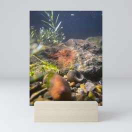 Bottom of Casco Bay (1) Mini Art Print