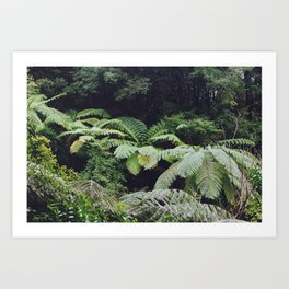 First forest (Abel Tasman way, New Zealand) Art Print