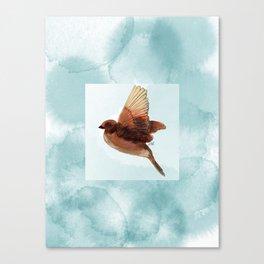 Sparrow in flight Canvas Print