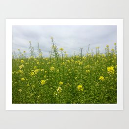 Field of Green and Gold Art Print