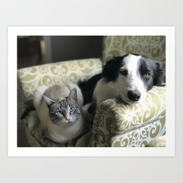 Farm Dogs and Cats Art Print