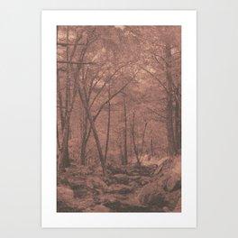 New England Woods Art Print
