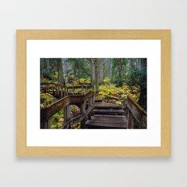 Giant Cedars Boardwalk in Revelstoke British Columbia, Canada Framed Art Print
