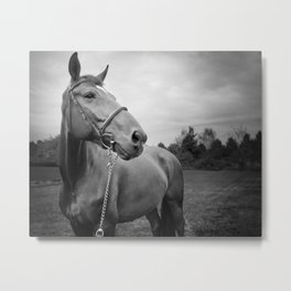 Horses of Instagram Metal Print
