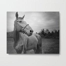 Horses of Instagram Metal Print