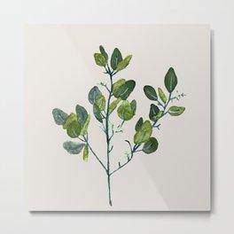 Eucalyptus Branch Metal Print