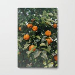 The Orange Tree | Valencia, Spain | Orange Fruit Details | Fine Art Nature Photography  Metal Print