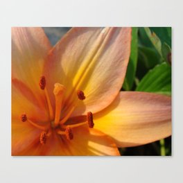 Orange Lily Closeup Canvas Print