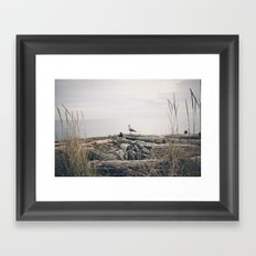 Seagull Framed Art Print