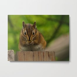 Chipmunk On A Fence Metal Print