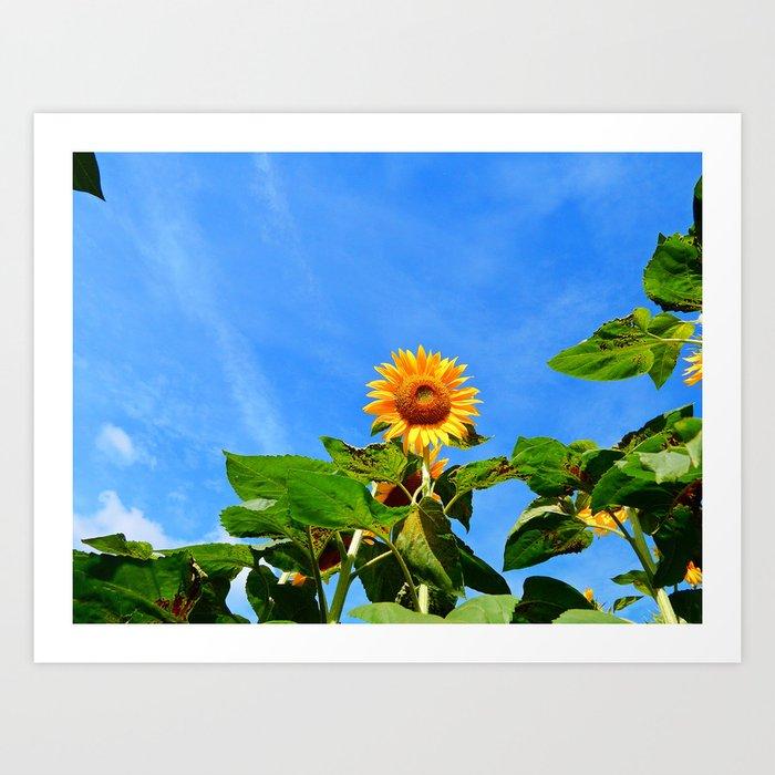 Sunflower in the Sky Art Print