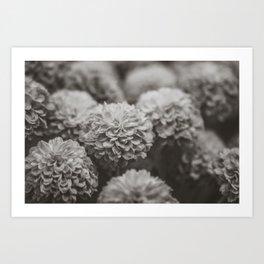 Sepia Black and White Botanical -- Chrysanthemums Art Print