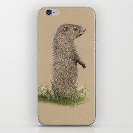 Juvenile Woodchuck iPhone Skin