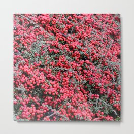 Small beautiful flower bush with small red fruits Metal Print