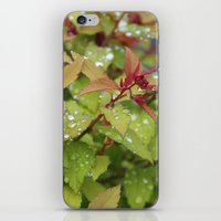 drink iPhone & iPod Skins featuring Drink by Kim Hawley