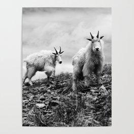 MOUNTAIN GOATS // 1 Poster