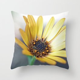 Osteospermum hyoseroides (Star of the Veldt) Throw Pillow