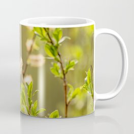 Spring willow branches Coffee Mug