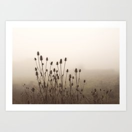 Seeds Heads in the Mist Art Print