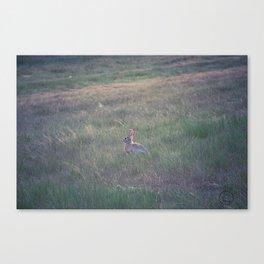 Farm Wabbit Canvas Print