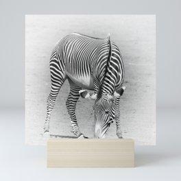 Hungry Zebra Mini Art Print