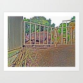 Rhino behind large metal gates. Art Print