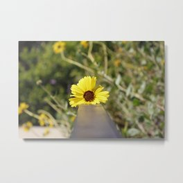 Little Yellow Metal Print