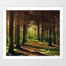 Woodland Tranquility Art Print