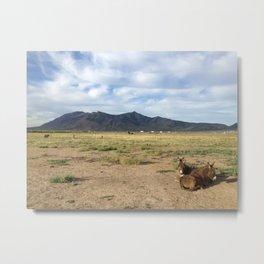 Colorado Cuddle Metal Print