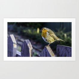 Mr. Robin. Art Print