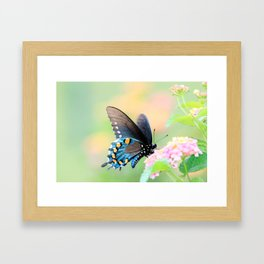Spicebush Swallowtail Butterfly on Lantana Framed Art Print