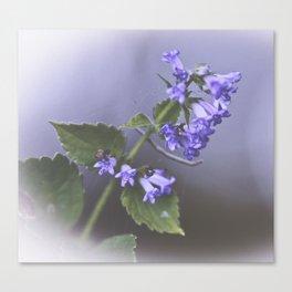 La Couleur de Violette Canvas Print