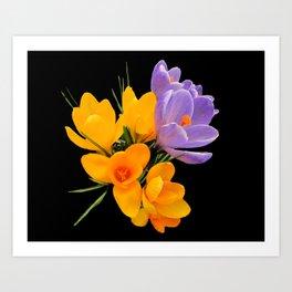 Think Flowers - Crocuses Art Print