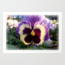 colorful spring Pansy Art Print