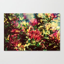 Double Exposure - Hana Canvas Print