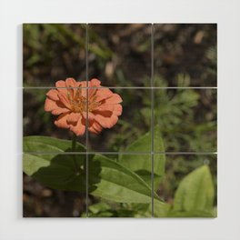 Jane's Garden - The Peachy Orange Flower Wood Wall Art