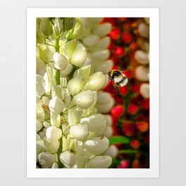 Bee. Art Print