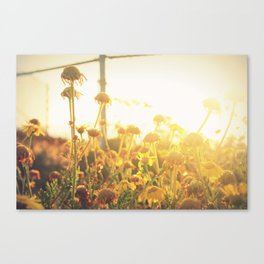 Sunlight Canvas Print